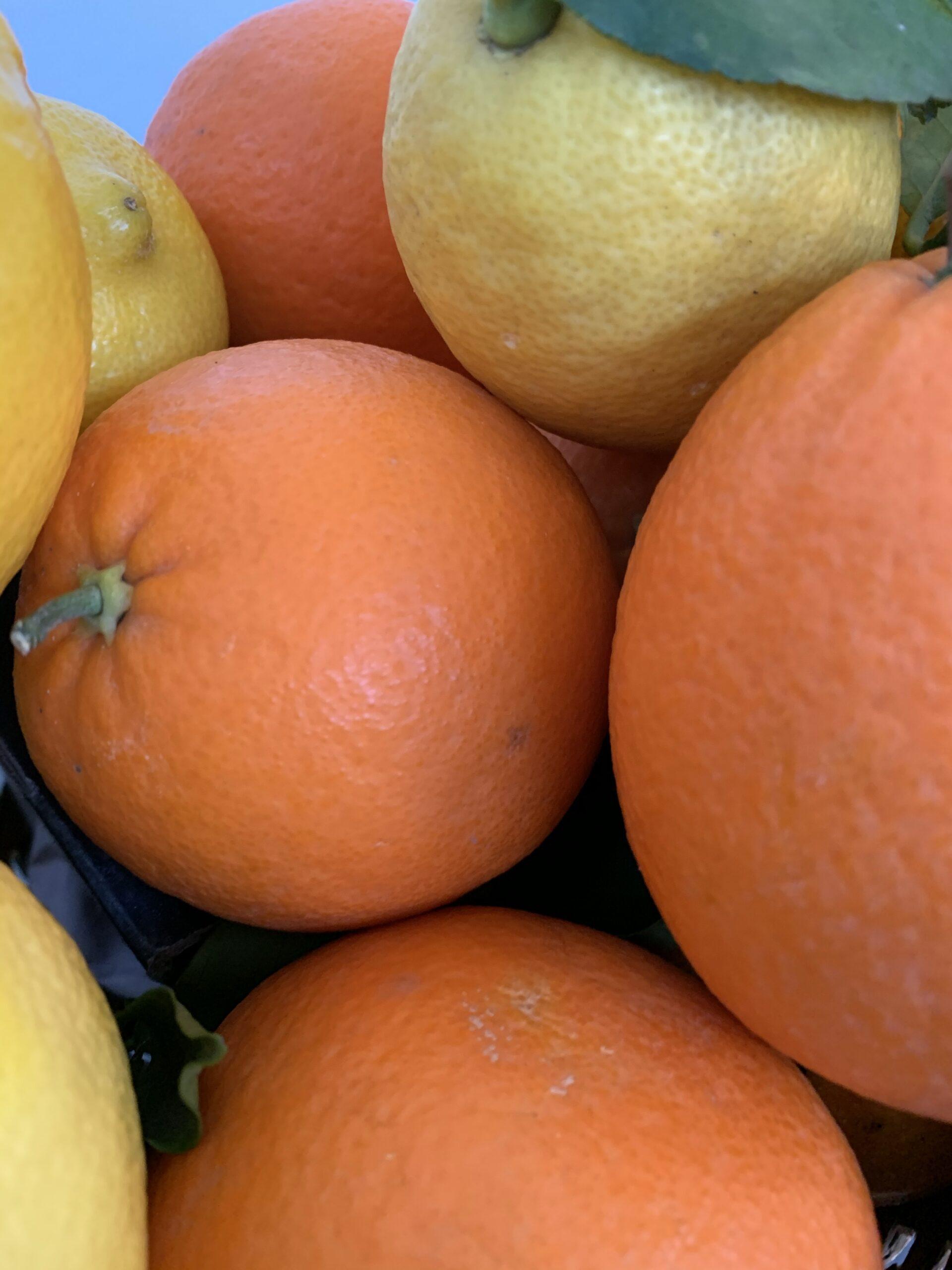 Passione per la frutta e la verdura