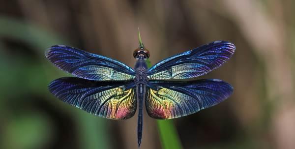 Fiabe Sonnacchiose – collana : La libellula blu